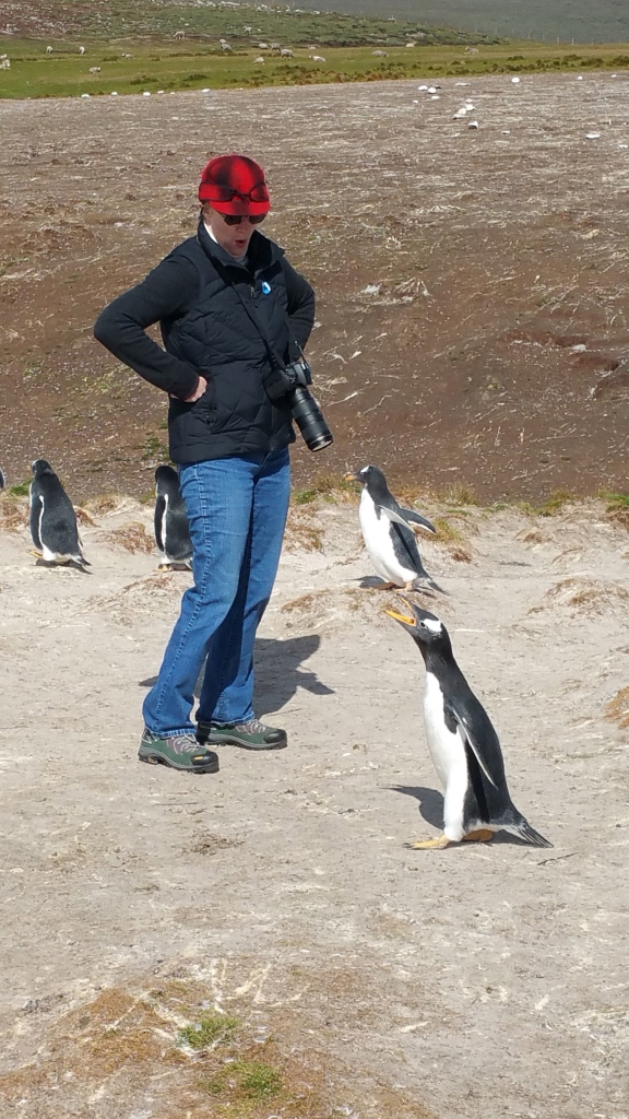 Talking to penguins