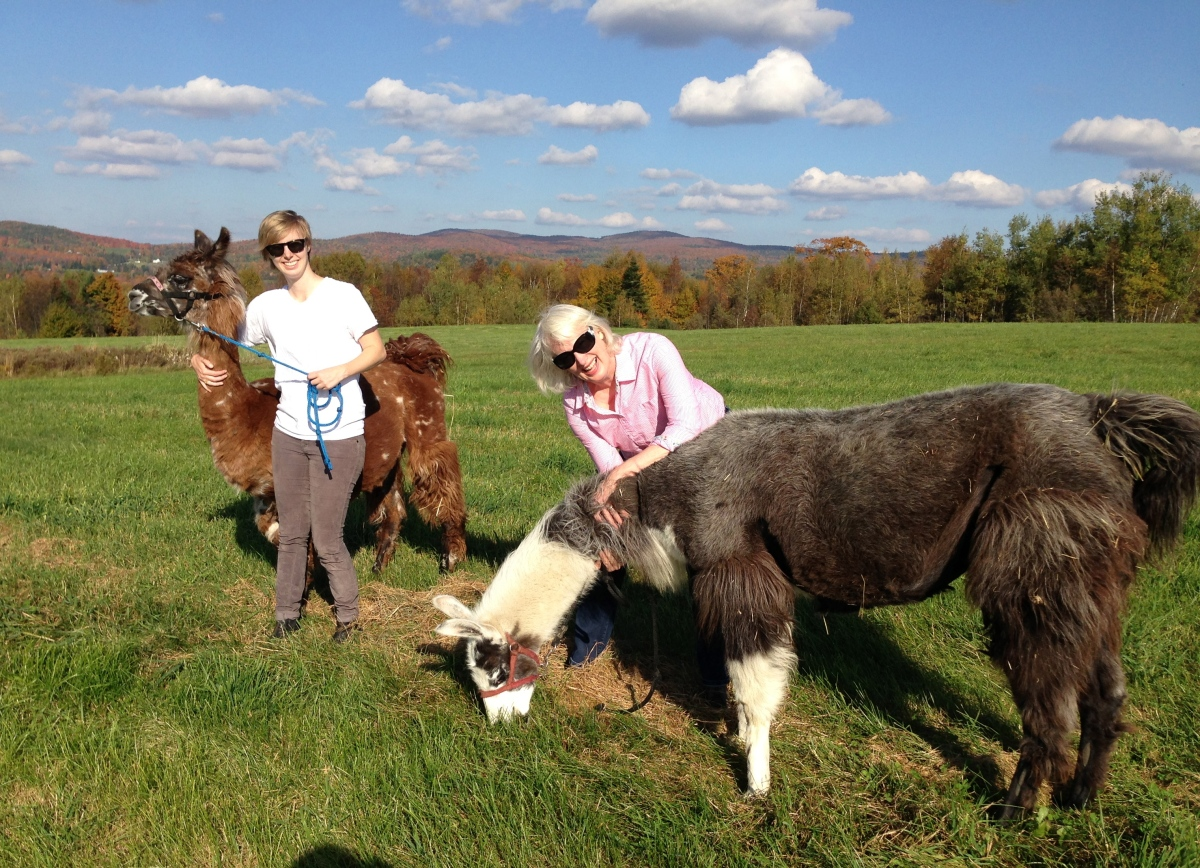 Walking Llamas at Agape Hill Farm in the Northeast Kingdom, Vermont